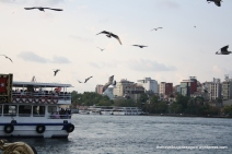 Sea gulls at Galata bridge