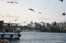 Sea gulls at Galata bridge