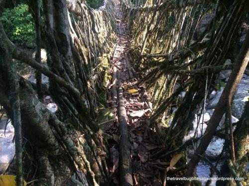 The Long Living Roots Bridge